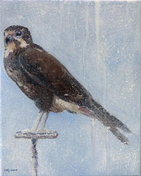 2013 brown falcon 25 x 20