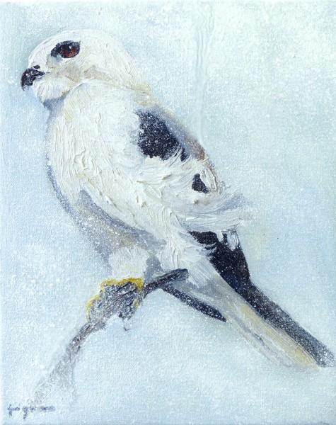 2013 letter-winged kite 25 x20 cm